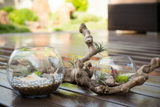 Modest Beauty Of Bonsai - Articles about Beautiful Decor 2 by  image