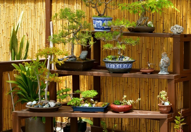 Modest Beauty Of Bonsai - Articles about Beautiful Decor 11 by  image